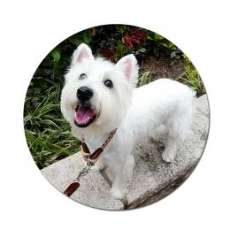 Superior Reflective Dog Training Leash